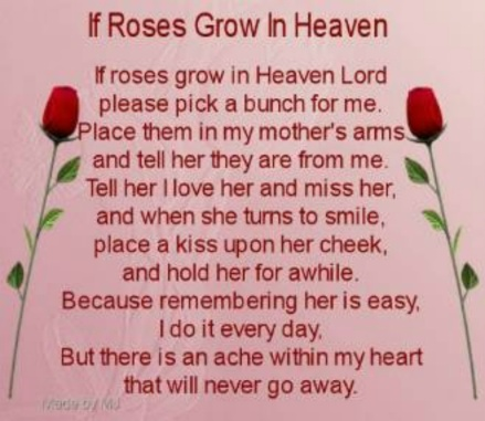 A rose for my mother in heaven
