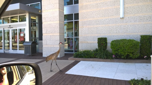 crane in best buy sidewalk may 2016