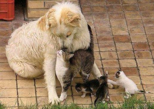animal-love