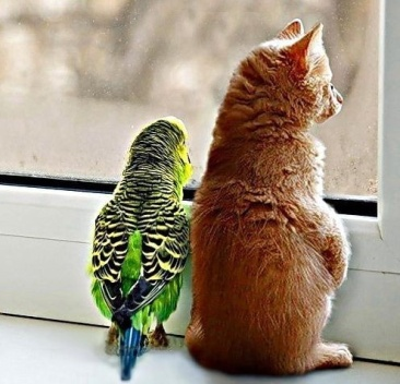 admiring-nature