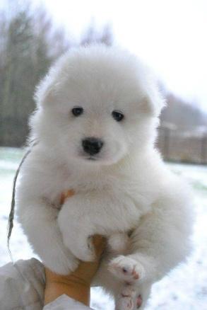baby-polar-3