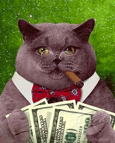 cat-with-cigar-and-money