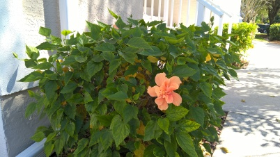 coral-flower-outside-my-door