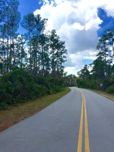stunning-road-scene-on-the-way-to-everglades-laura-march-2016