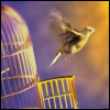 bird-cage-free